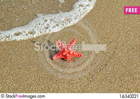 Free Red Starfish Stock Image - 16343221