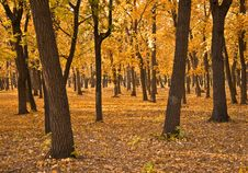 Free Autumn Forest. Royalty Free Stock Photography - 16340477