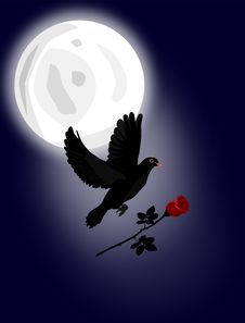 Free Black Dove With Red Rose Stock Image - 16340741