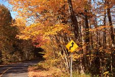 Fall Color Road Drive Royalty Free Stock Image