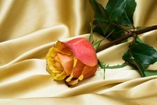 Free Pink Rose Royalty Free Stock Photography - 16342377