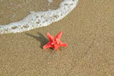 Free Red Starfish Stock Image - 16343221
