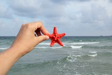 Hand Holding A Starfish Royalty Free Stock Image