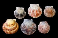 Free Arrangement Of Sea Shells Royalty Free Stock Image - 16343436