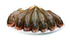 Fresh Raw Fish Royalty Free Stock Photography