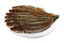 Free Fresh Raw Fish Royalty Free Stock Image - 16346706