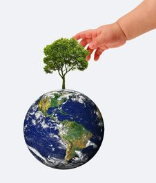 Hands, The Young Sprout And Our Planet Earth Royalty Free Stock Image