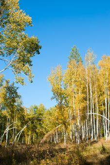 The Autumn Forest Stock Images