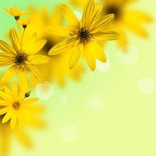 Free Daisywheel Stock Images - 16349064