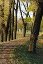 Free Autumn Park Royalty Free Stock Photo - 16350595