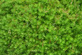 Free Green Leaves Stock Photos - 16354343