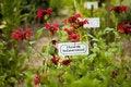 Free Wild Flowers Royalty Free Stock Photo - 16355955