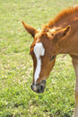 Free Shy Foal Waiting For Its Mother Royalty Free Stock Images - 16357099