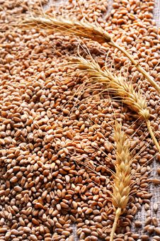 Free Wheat Seeds On Rough Material Royalty Free Stock Images - 16350219