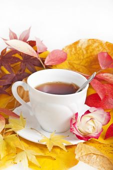 Free Fall Cup Of Tea Royalty Free Stock Photo - 16350365