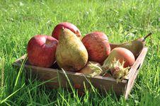 Free A Fruit Basket Of Fall Stock Photos - 16350573