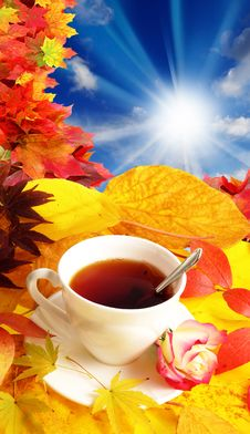 Free Cup Of Tea And Fall Background Royalty Free Stock Photos - 16351518