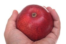 Free Red Apple In Hand Stock Images - 16353334