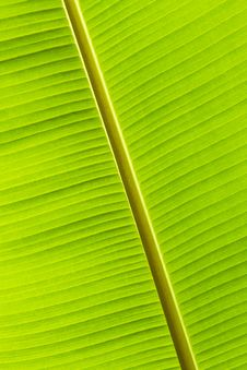 Free Banana Leaf Background Royalty Free Stock Images - 16354139