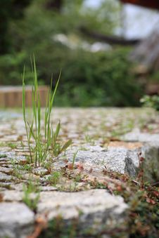 Free Garden Stone Path With Grass Stock Image - 16354481