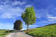 Free Road In A Meadow Royalty Free Stock Photo - 16355845