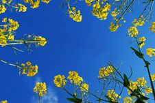 Free Frame Of Yellow Flowers Royalty Free Stock Photos - 16356288