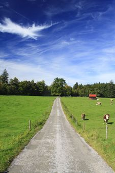Free Road In A Meadow Stock Photos - 16356343