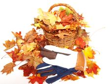Free Leaves,wicker And Gloves Royalty Free Stock Photography - 16356487