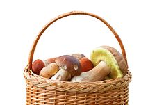 Free Mushrooms In A Basket. Stock Photo - 16356570