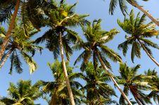 Free Palms Royalty Free Stock Photo - 16356675