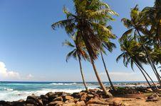 Free Palms Royalty Free Stock Image - 16356726