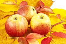 Free Apples Stock Photo - 16357000