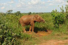 Free Elephant Stock Photo - 16357010