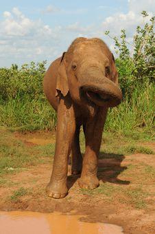 Free Elephant Stock Images - 16357024