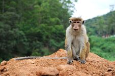 Free Posing Monkey Stock Images - 16357094