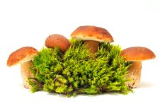 Free Mushrooms On Moss Stock Images - 16357574