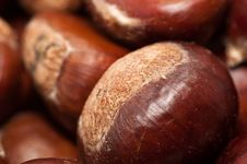 Free Chestnuts Stock Images - 16357744
