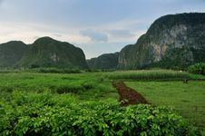 Fields In Vinales Valley