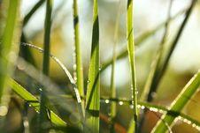 Free Morning Prairie Grass Stock Photos - 16359183