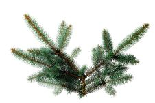 Free Pine Sprig For Christmas Royalty Free Stock Images - 16359339