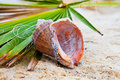 Free Seashell On Green Leaf Stock Images - 16364394