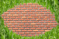 Free Eye Shape Grass In Front Of Brick Wall Stock Photography - 16369552