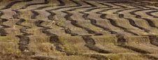 Free Wheat Field Swath Royalty Free Stock Photos - 16360018