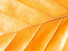 Free Yellow Leaf. Royalty Free Stock Photo - 16360625