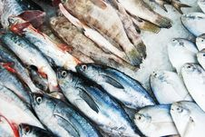 Many Kind Of Fish In Fresh Market Royalty Free Stock Photos