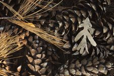 Free Autumn Leaf And Pine Cones Royalty Free Stock Images - 16361179