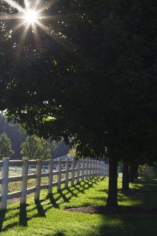 Free Sunburst Thru The Trees Royalty Free Stock Images - 16361199