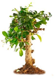 Free Tree Royalty Free Stock Image - 16361556