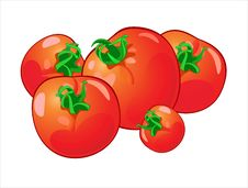 Free Tomatoes Stock Photography - 16362032