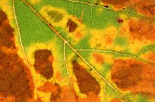 Free Autumn Leaf Stock Image - 16362201